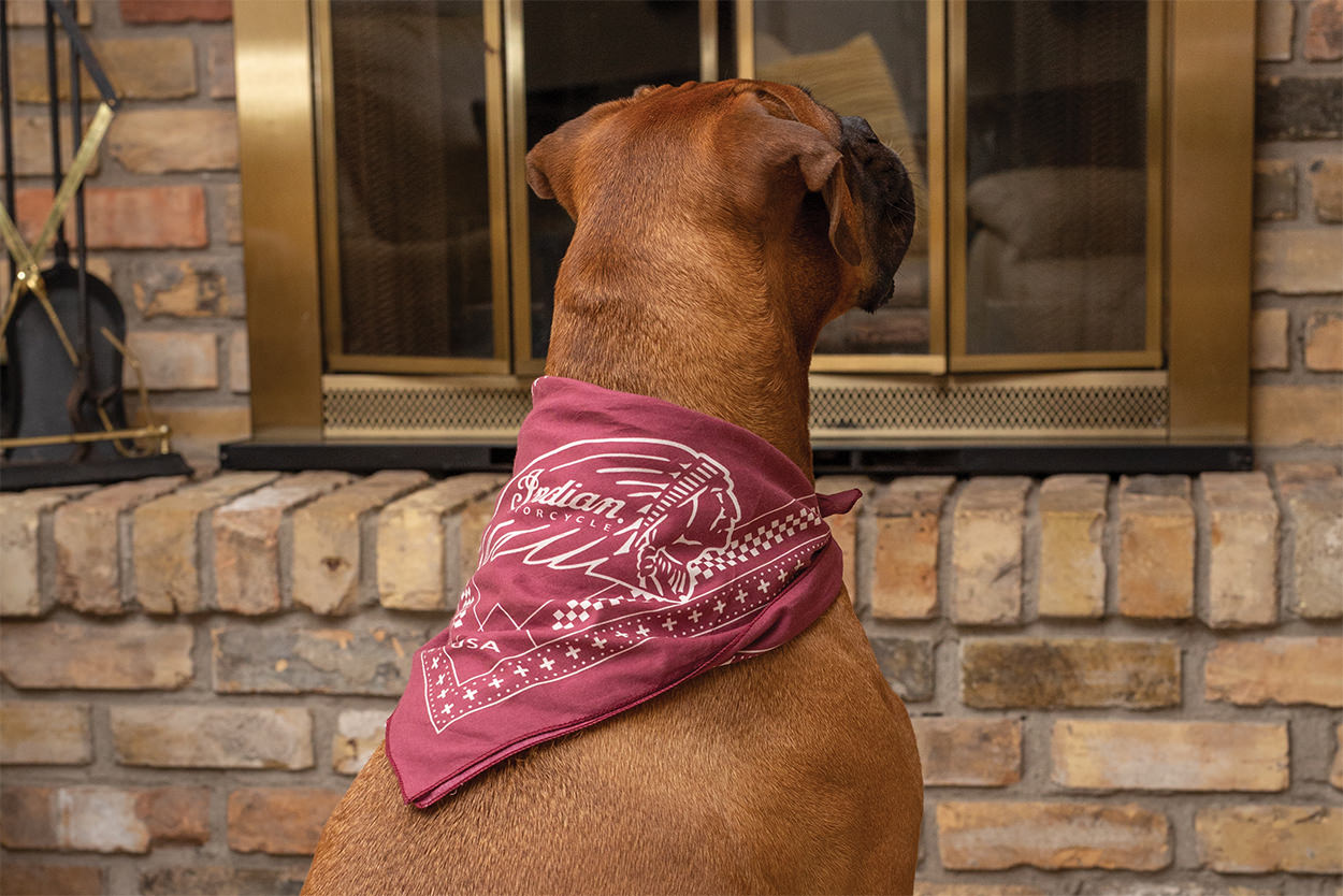 Indian Motorcycle dog accessories